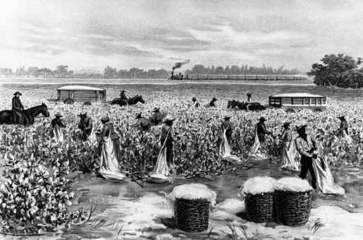 What Made Slavery and the Cotton Economy So Desirable ... Cotton Plantations 1800s