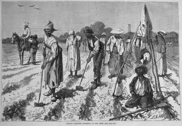 cottonculture-1875-600x417