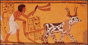 egyptian plow